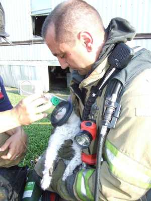 Photo: Gulfport Firefighters Treat Cat at Scene of Fire