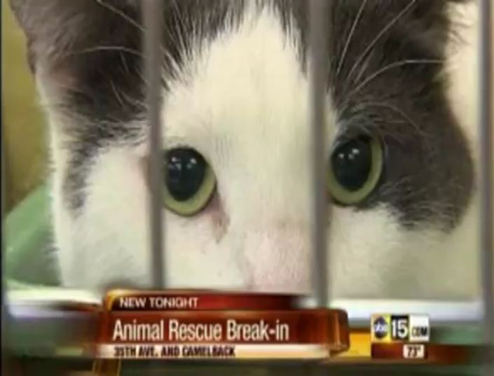 HALO Animal Rescue Hurt by Theft and Destruction
