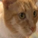 Leon Survives 300 Mile Stowaway Trip Under Car's Hood