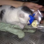 Firefighters Rescue and Revive 2 Week Old Kitten