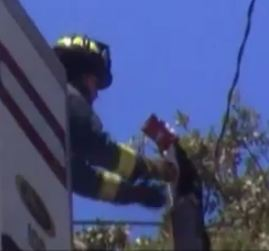 Firefighters Try to Rescue Cat Stuck Up Utility Pole With Doritos Bag on Its Head