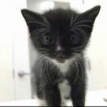 Adorable Kitten Rescued From Inside of a Home's Walls