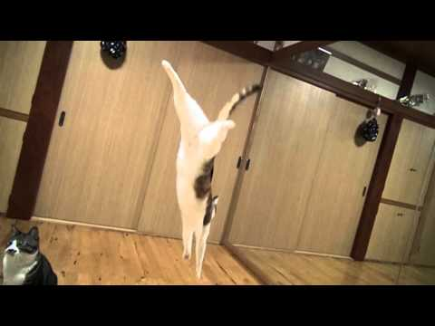 Slo-Mo Cat Jumps Competition: Golden Week Holiday Fun