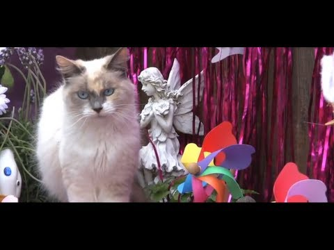 Mother's Day Special: Interview With The Furball Fables Kitties & Happy Mother's Day From the Cats To You