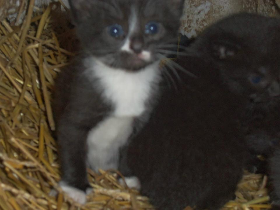 Reward Offered in Long Island Feral Colony Kitten Killings