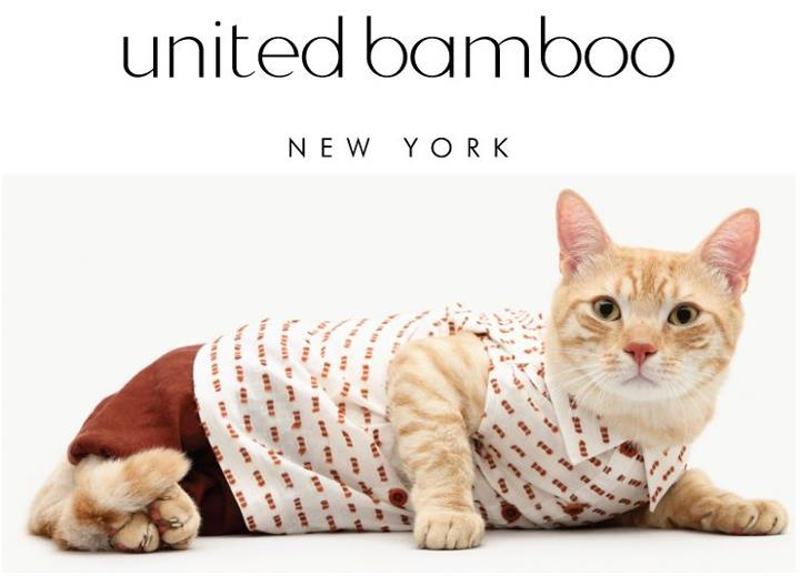 Cat Casting Call: United Bamboo 2013 Cat Calendar Model Search Underway