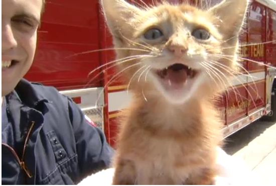 Miami Fire Rescue Saves Kitten From Storm Drain: Now Looking For Adopter