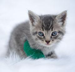 R.I.P. Pip: Kitten Found In Trash Bag Succumbs To Illness