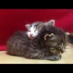 Foster Kittens Asleep and Awake