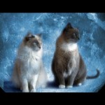 Furball Fables Video: Is Your Cat Psychic?
