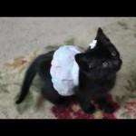 Cute Kitten Playing in a Dress