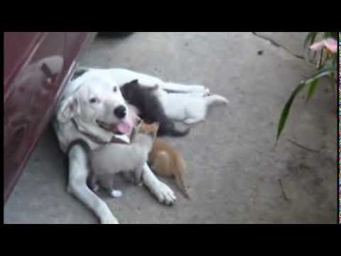 Mama Dog Adopts Her Deceased Kitty Sibling's Kittens