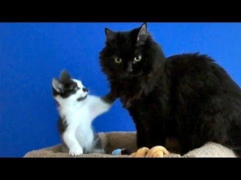 Kodi and Shorty: Love Will Keep Us Together