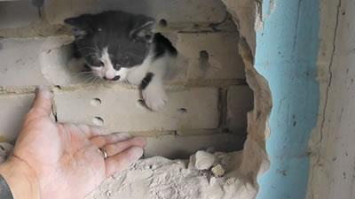 Fire and Rescue Crew Saves Kitten Trapped in Wall