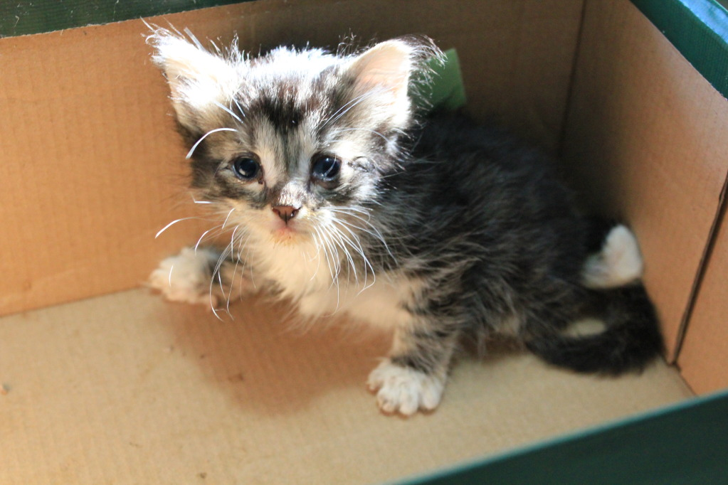 Scooter: Special needs Kitten Like Corky Needs Help