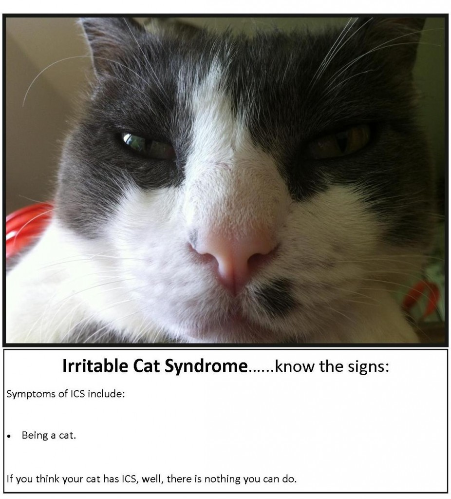 Irritable Cat Syndrome … Know the signs