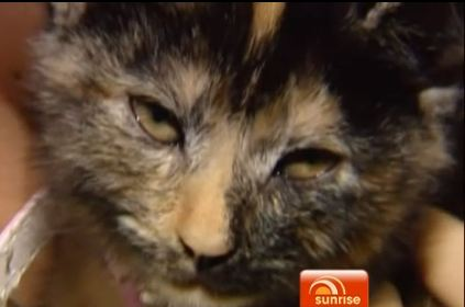 Kitten Makes Miraculous Recovery