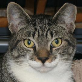 Alley Cat Rescue Denver
