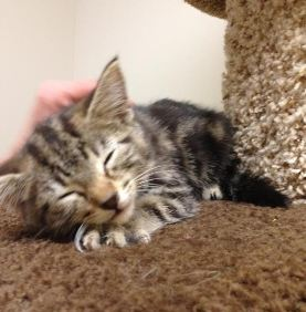 #pipekitty Creates a Sensation During Her Rescue