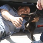 Kitten Finds A Home After 400 Mile Stowaway Car Trip