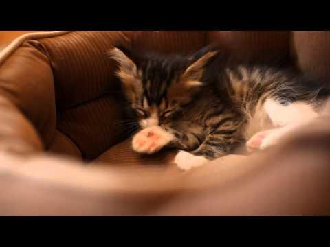 Cute Kittens At Play