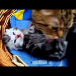 Cat and Kittens: Sweet Love in a Basket