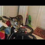 Cat Discovers Wheels