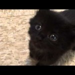 Adopt a Lucky Black Cat… They have superpowers!