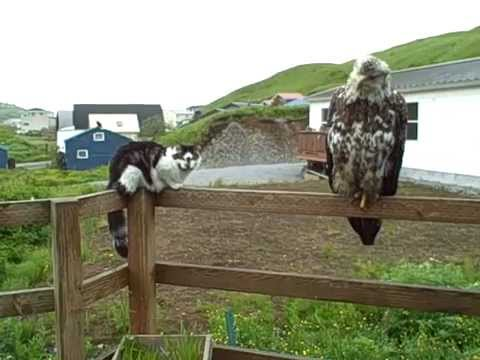 Gizmo the Cat and His Eagle Friends Hanging Out