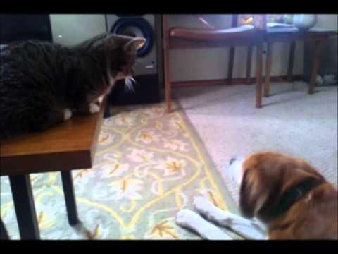 Kung Fu Bub Shows Sammy the Dog Who's Boss