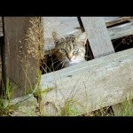 Life On The Streets: The Feral Cat Crisis and Its Humane Solutions