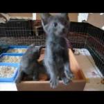 A Kitten Toy Surprise