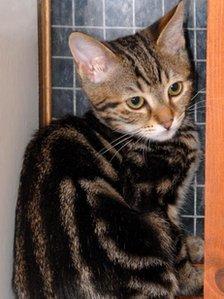 Stowaway Kitten Travels 2,000 mi. From Turkey to England