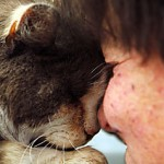 Happy Again: Cat Saved From Fire Sees Petmom