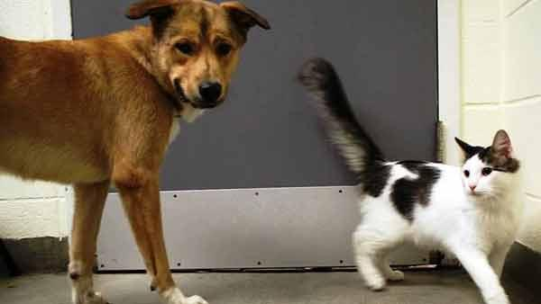 Bonded Cat and Dog Find a Home Together