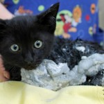 Ace the Kitten Gets Out of a Sticky Situation and Finds a Home