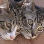 Trash Men Save Boxed Kittens Just in The Nick of Time