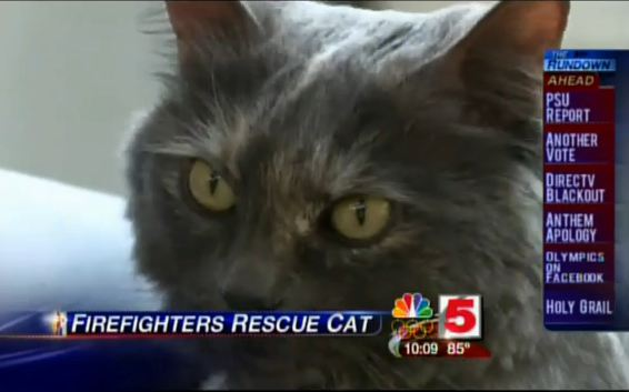 Firefighters Use Pet Oxygen Mask Training To Save Cat