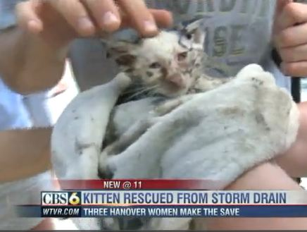 Group of Girls Rescue Kitten When Animal Control Cannot