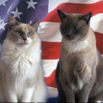 What Scares Cats on the 4th of July – Furball Fables
