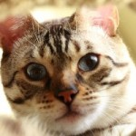 Top 10 Most Unusual Dog and Cat Names of 2012 Revealed