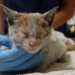 Kitten Survives Container Trip From Shanghai to LA