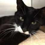 Sasha Injured Stray Cat Returns Home After News Feature Finds His Family