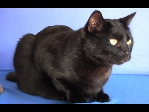 Black Cat Appreciation Day – Furball Fables