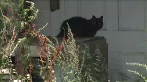 Complaint Causes Town To Remove Responsibly Managed Feral Cats