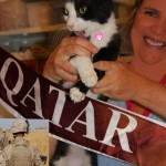 Indy, Cat Adopted by US Soldier in Qatar, is Headed Home