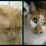 Whiskerville Cats: Last Chance
