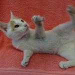 Ni Hao Update Photos: Shanghai to LA Kitten
