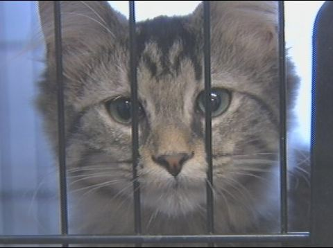 Community Helps Overcrowded No Kill Shelter to Preserve Its Mission