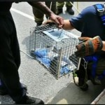 Firefighters Save Kittens From Drowning in Storm Drain